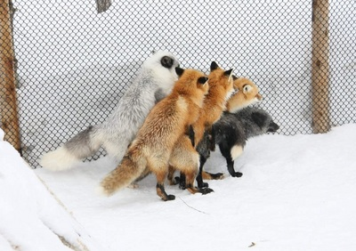 New Firefox Plugins
