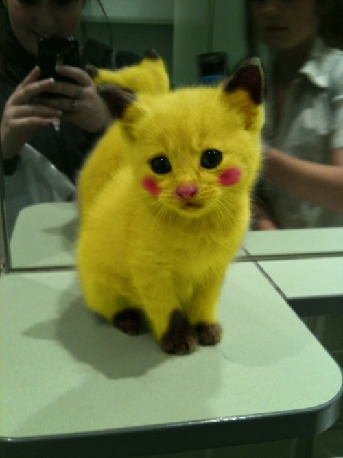 pokemon_cat