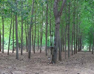 Liu Bolin, Hiding in the City No. 94 - In the Woods